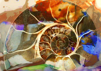 Ammonit 2
