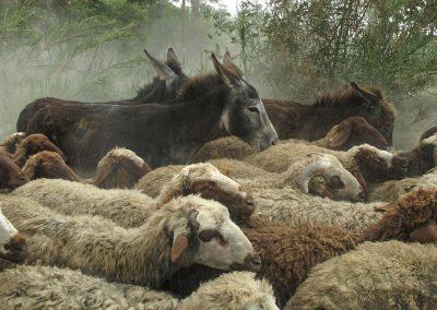 Gemischte Herde