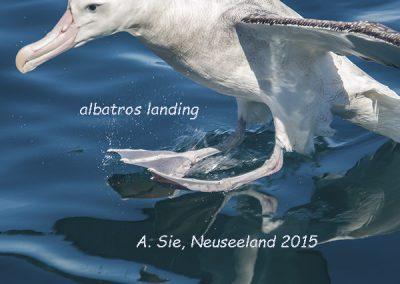albatros landing